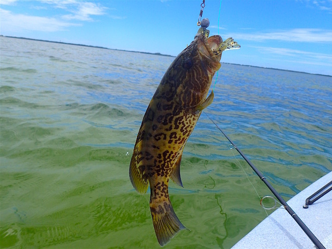 Nice day way off topic window cleaning resource for Is today a good day to go fishing