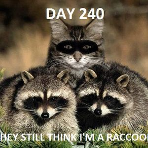 cat%20raccoon%20mask
